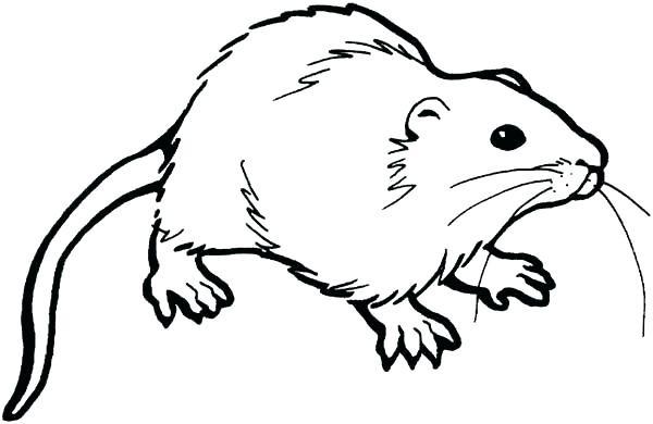 600x390 Rat Coloring Page Free Printable Pages Entrancing Wagashiya