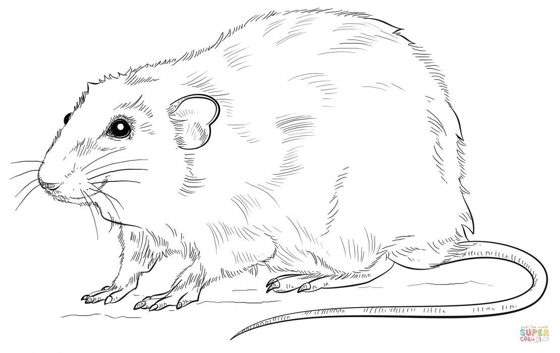 1110x700 Rat Coloring Pages