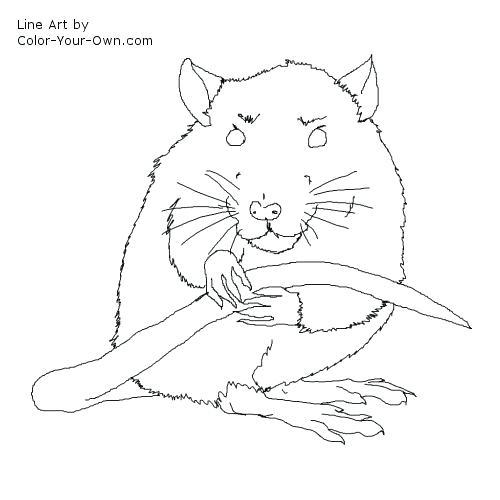 500x500 Rat Coloring Pages Cute Rat Coloring Pages
