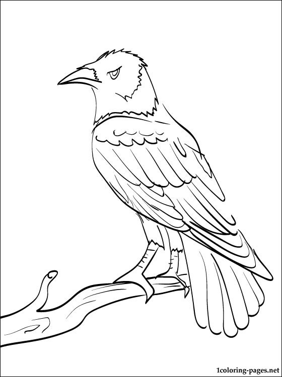 560x750 Raven Coloring And Printable Page Coloring Pages