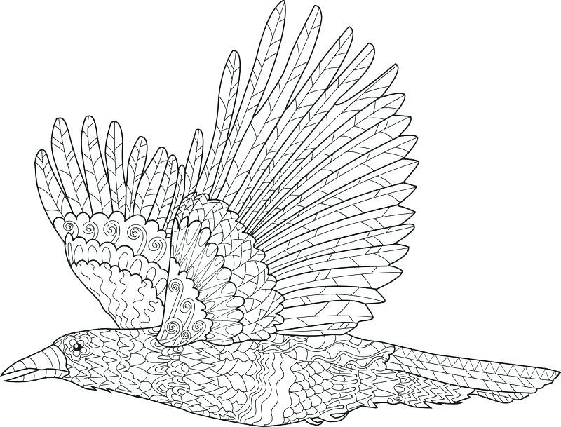 800x609 Ravens Coloring Pages