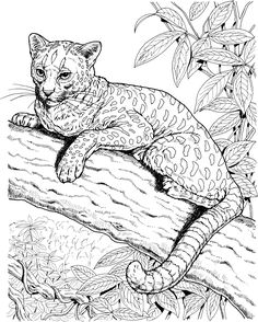 Real Cat Coloring Pages At Getdrawings Free Download