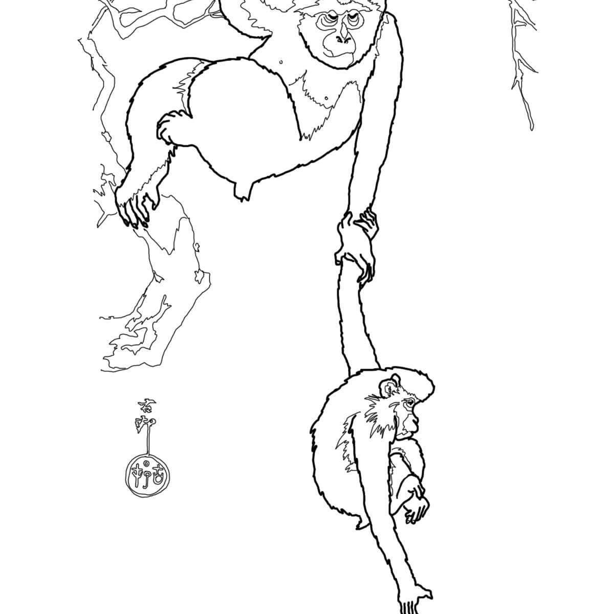 1200x1200 The Best Excellent Emperor Tamarin Monkey For Kids Black Handed