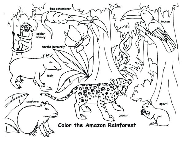 600x460 Real Animal Coloring Pages Print Amazon Animals Coloring Page