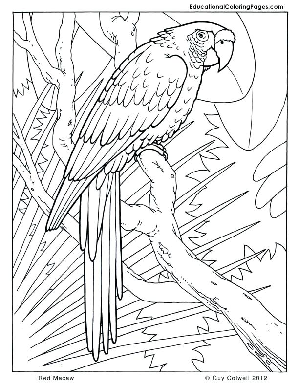612x792 Real Coloring Pages Monumental Real Animal Coloring Pages Cool