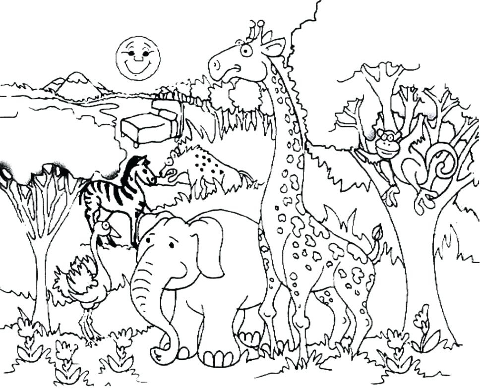 970x785 Forest Animals Coloring Pages Forest Animal Coloring Pages Real