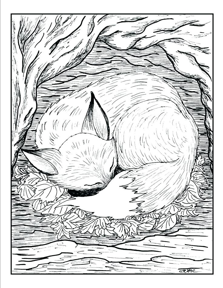 736x952 Cute Animal Coloring Pages Realistic Coloring Pages Of Animals