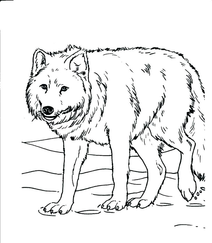 728x833 Forest Animal Coloring Pages For Adults Printable Coloring