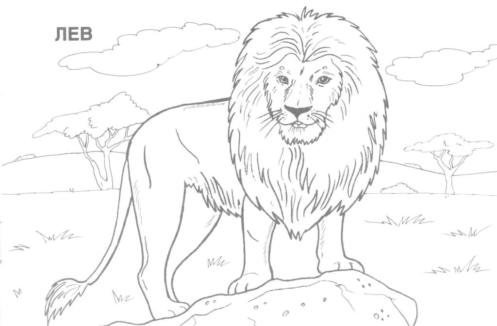 1024x673 Free Printable Realistic Animal Coloring Pages