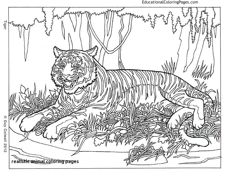 792x612 Pattern Animal Coloring Pages And Print For Free For Realistic