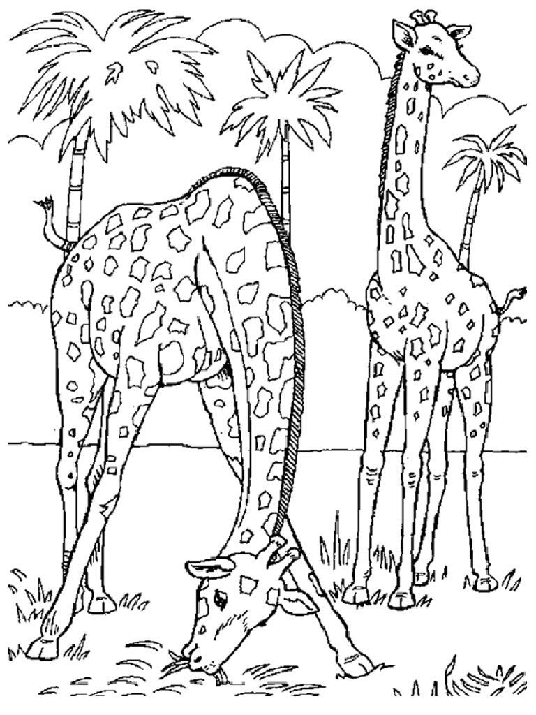 768x1024 Printable Coloring Pages Jungle Animals Realistic Animal Cartoon