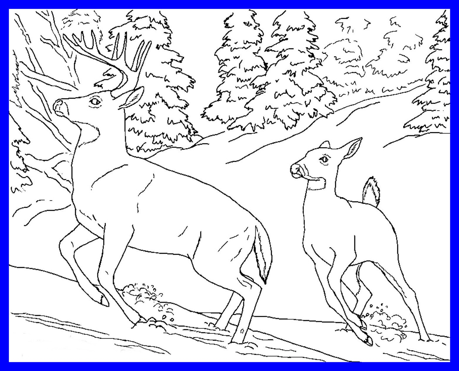 1560x1260 Stunning Realistic Animal Coloring Pages Collection Printable Pics
