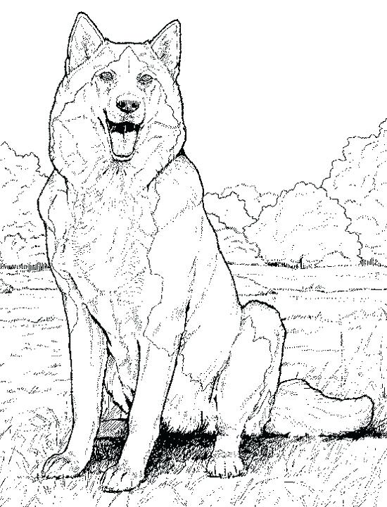 550x720 Realistic Animal Coloring Pages