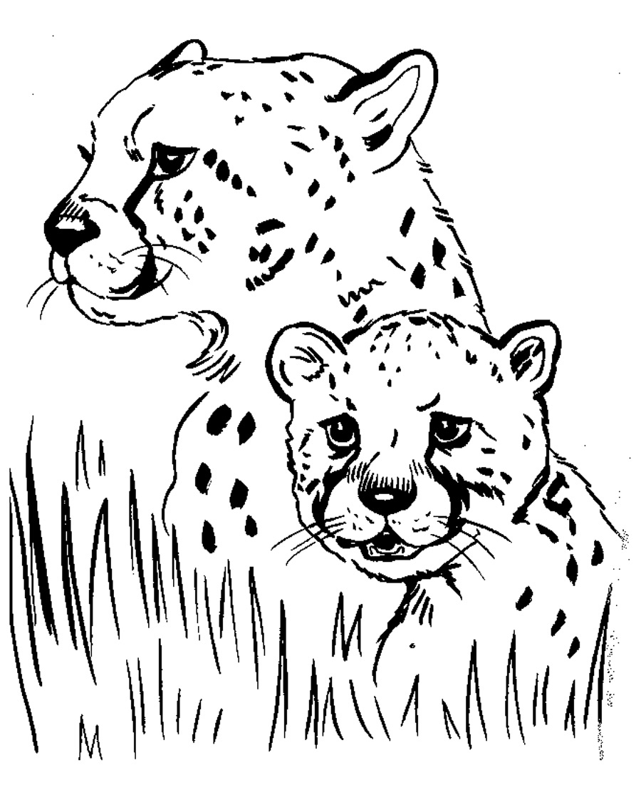 900x1101 Cheetah Family Coloring Pages To Realistic