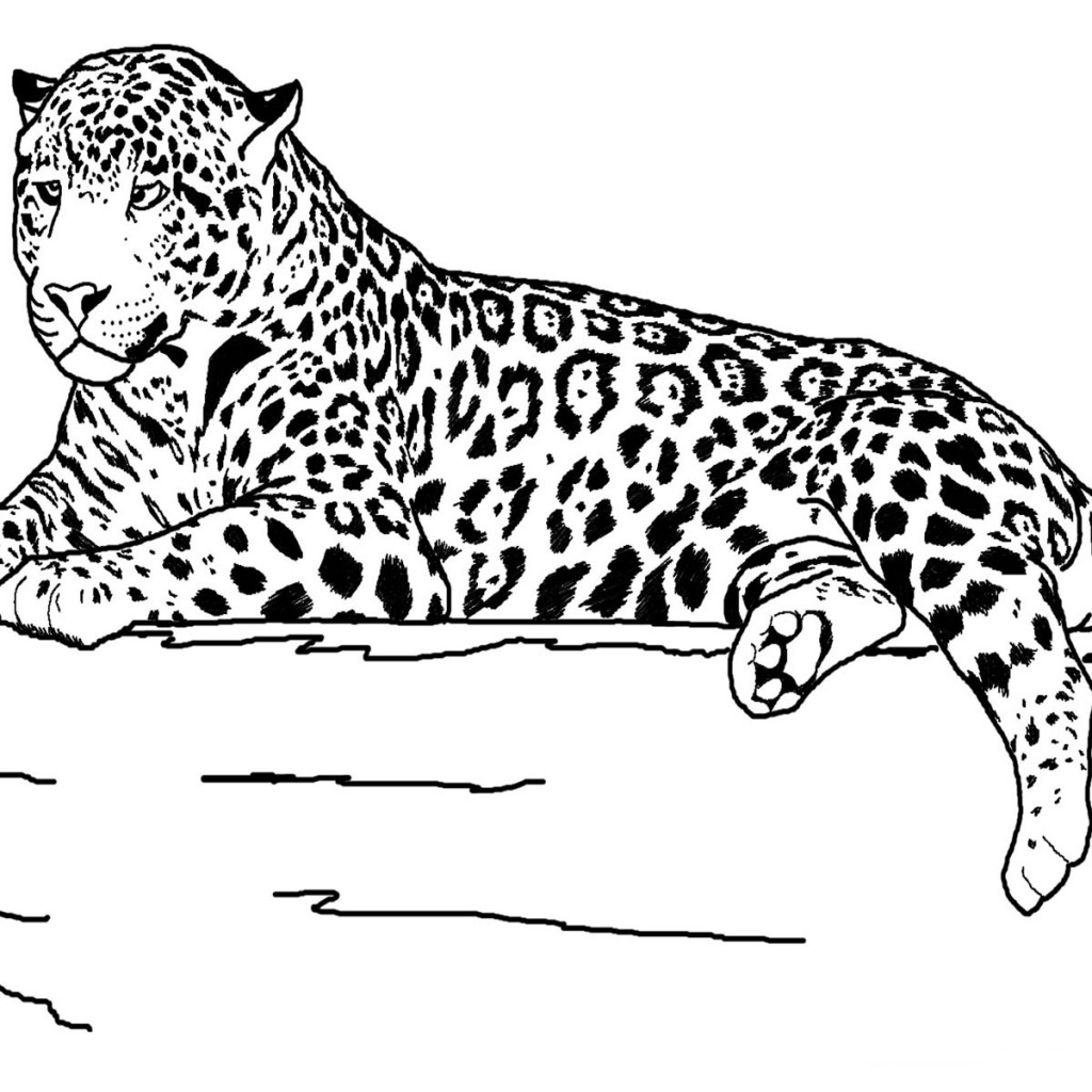 1024x1024 Coloring Pages Animals Printable Design Safari Animal Free