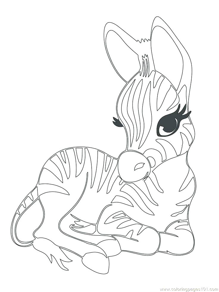 736x980 Baby Animal Coloring Pages Free