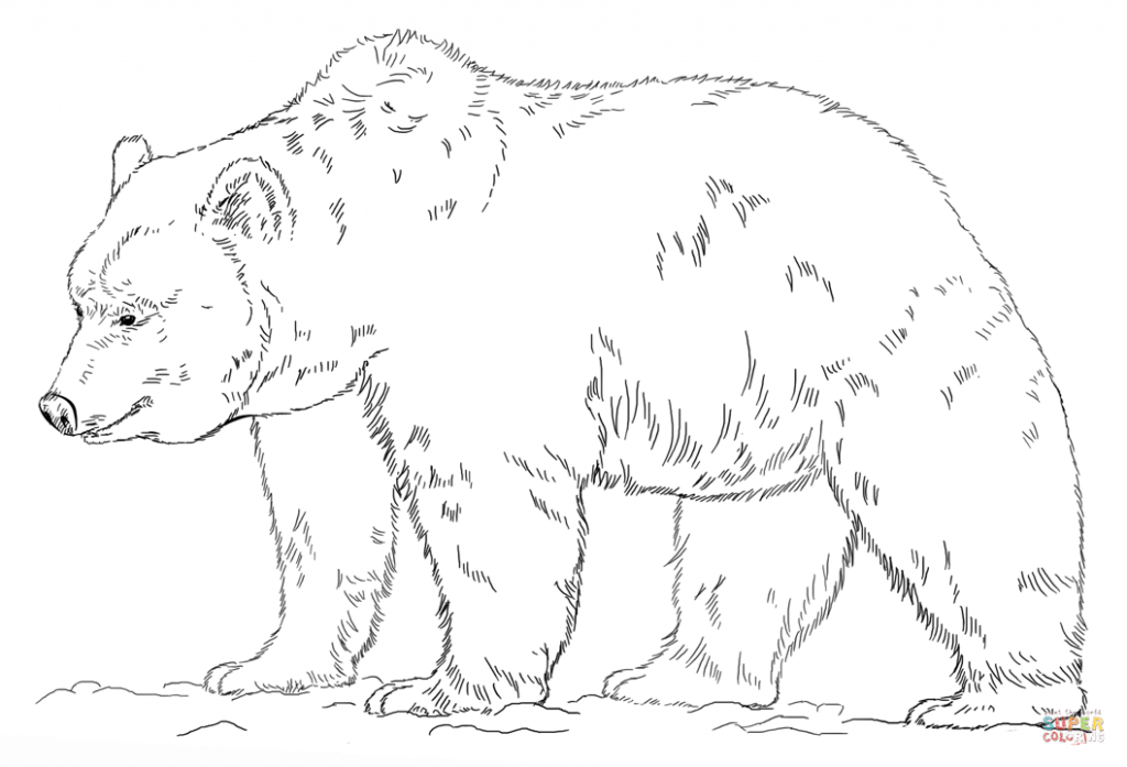 1024x697 Free Grizzly Bear Coloring Page