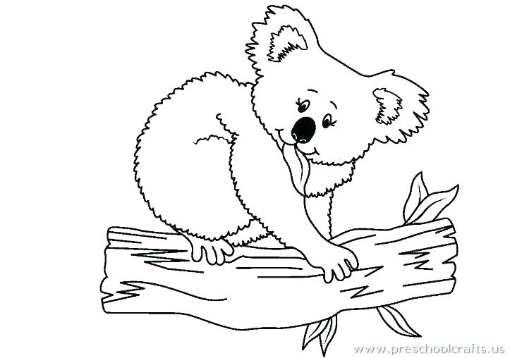 723x508 Koala Bear Coloring Pages Funny Koala Bear Coloring Page Realistic