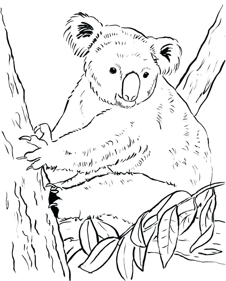 760x948 Koala Coloring Page Printable Koala Coloring Pages Bear Page Bell