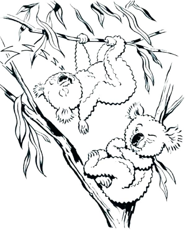 600x750 Koala Coloring Pages Koala Coloring Pages Realistic Koala Bear