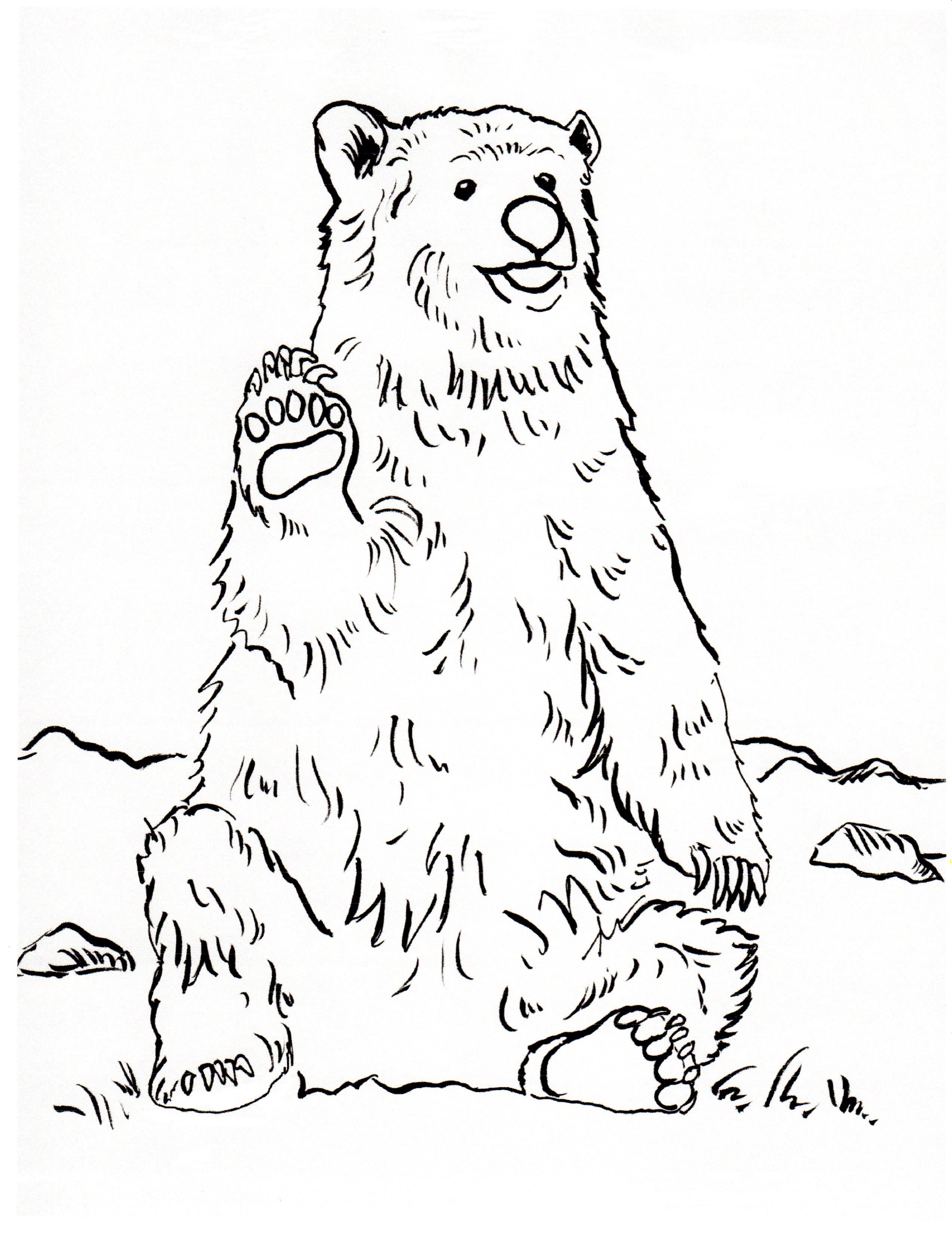 2545x3300 New Realistic Bear Coloring Pages