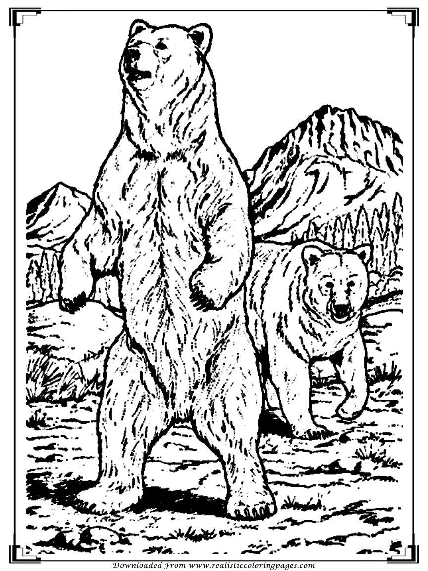 864x1152 Bear Coloring Pages For Adult Printable Realistic Coloring Pages
