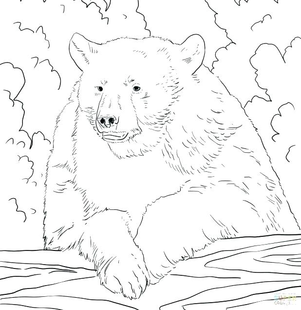 618x635 Brown Bear Coloring Page