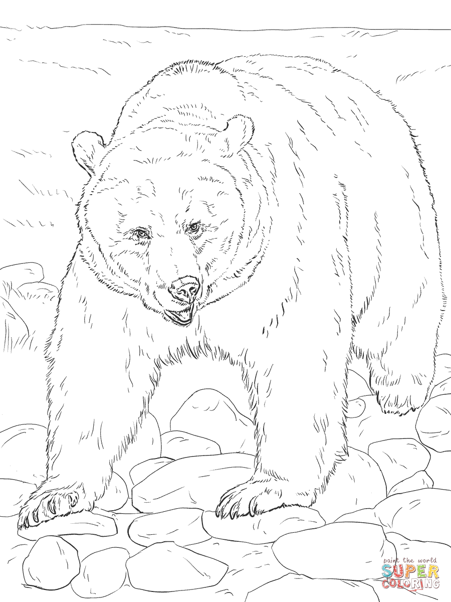 900x1200 Realistic Grizzly Bear Coloring Page Free Printable Coloring Pages