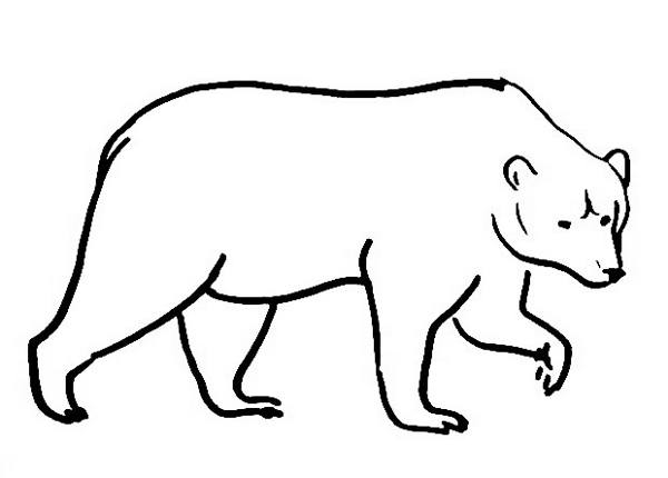 600x430 Bear Coloring Pages