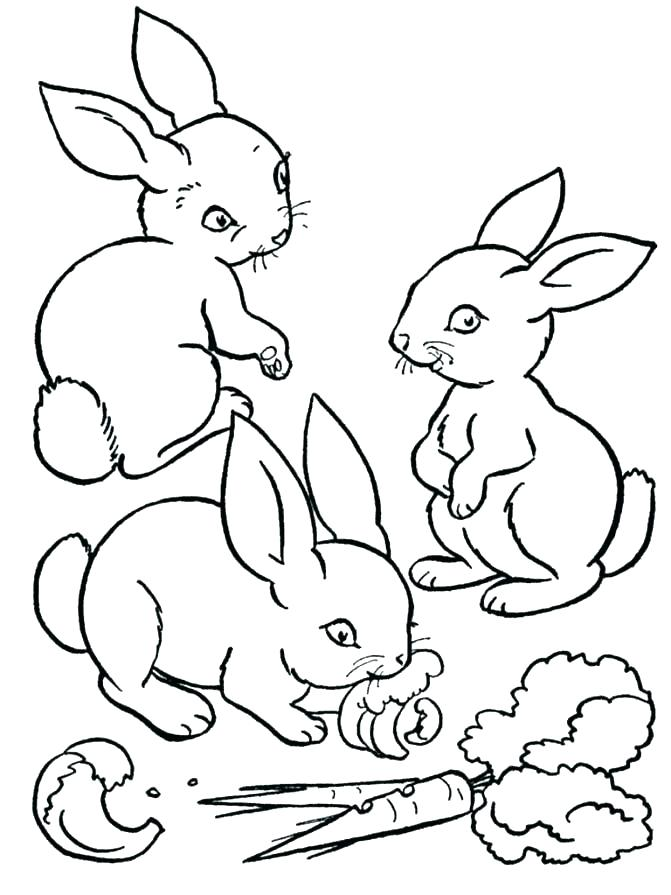671x895 Coloring Pages Bunnies Realistic Bunny Coloring Page Copy Rabbit