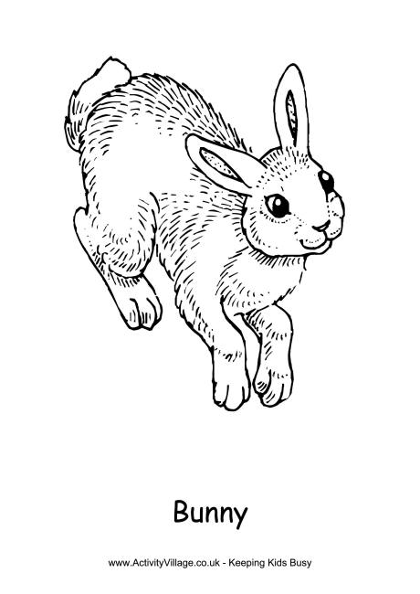 460x650 Rabbit Colouring Pages