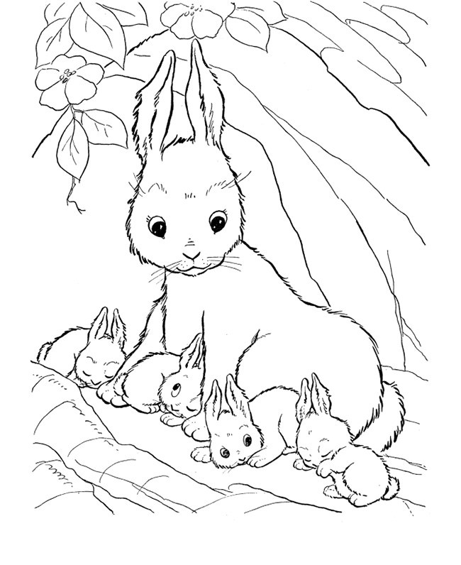 650x796 Realistic Bunny Coloring Pages Lovely Farm Animal Template Animal