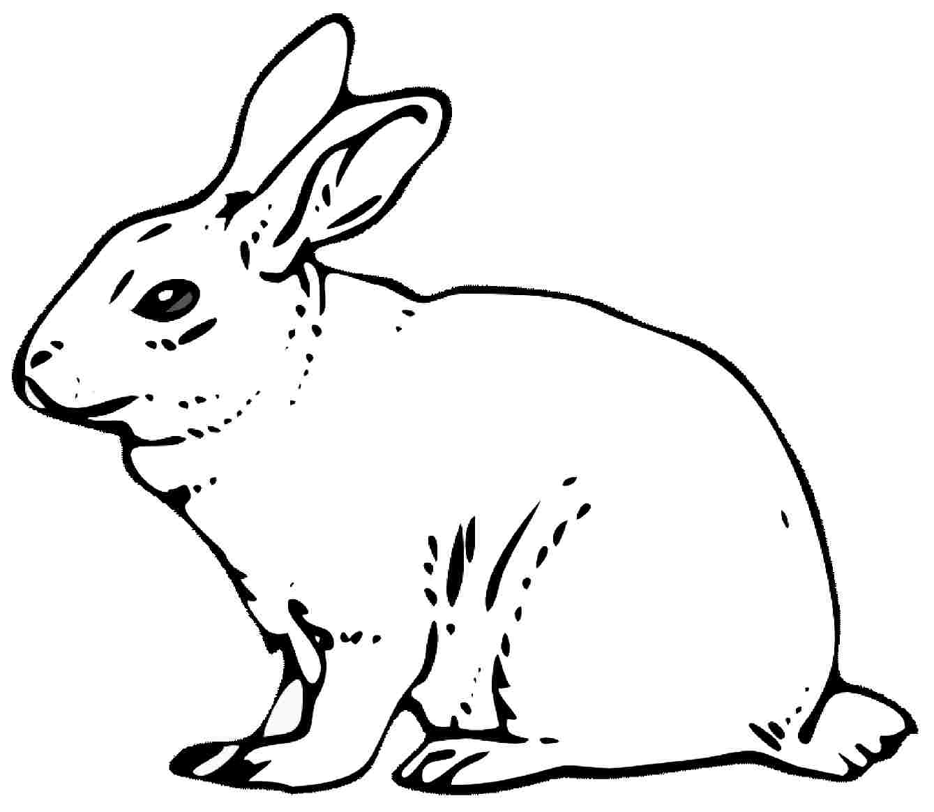 1339x1164 Remarkable Realistic Bunny Coloring Pages Rabb