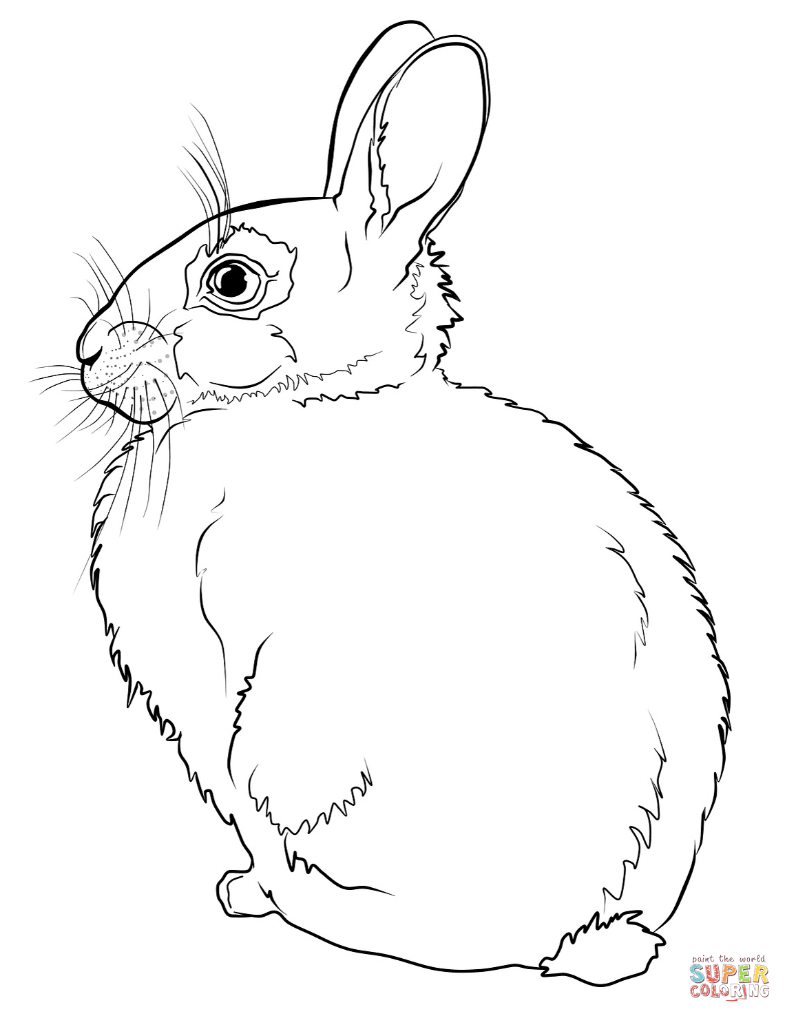 1140x1475 Unparalleled Realistic Bunny Coloring Pages Ra