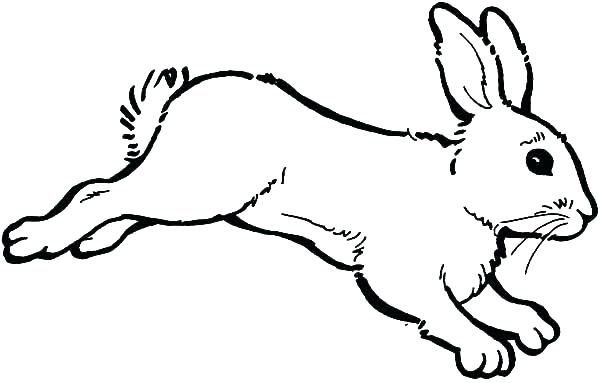 600x383 Bunny Coloring Page