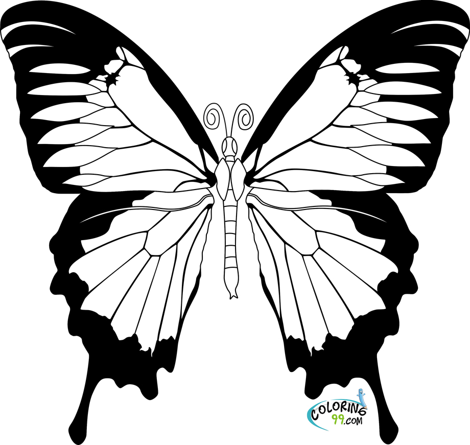 Realistic Butterfly Coloring Pages at GetDrawings.com | Free ...