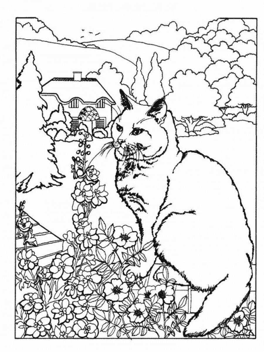 Realistic Cat Coloring Pages At Getdrawings Com Free For Personal