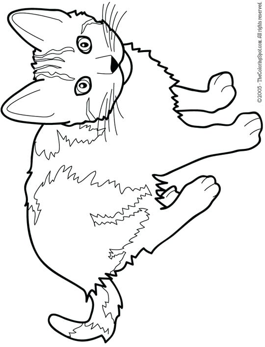 Realistic Cat Coloring Pages Printable At Getdrawings Com Free For