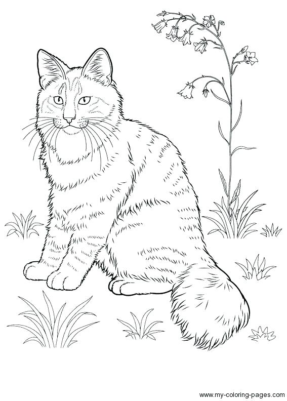567x792 Dog And Cat Coloring Pages Printable Cat Coloring Page Realistic
