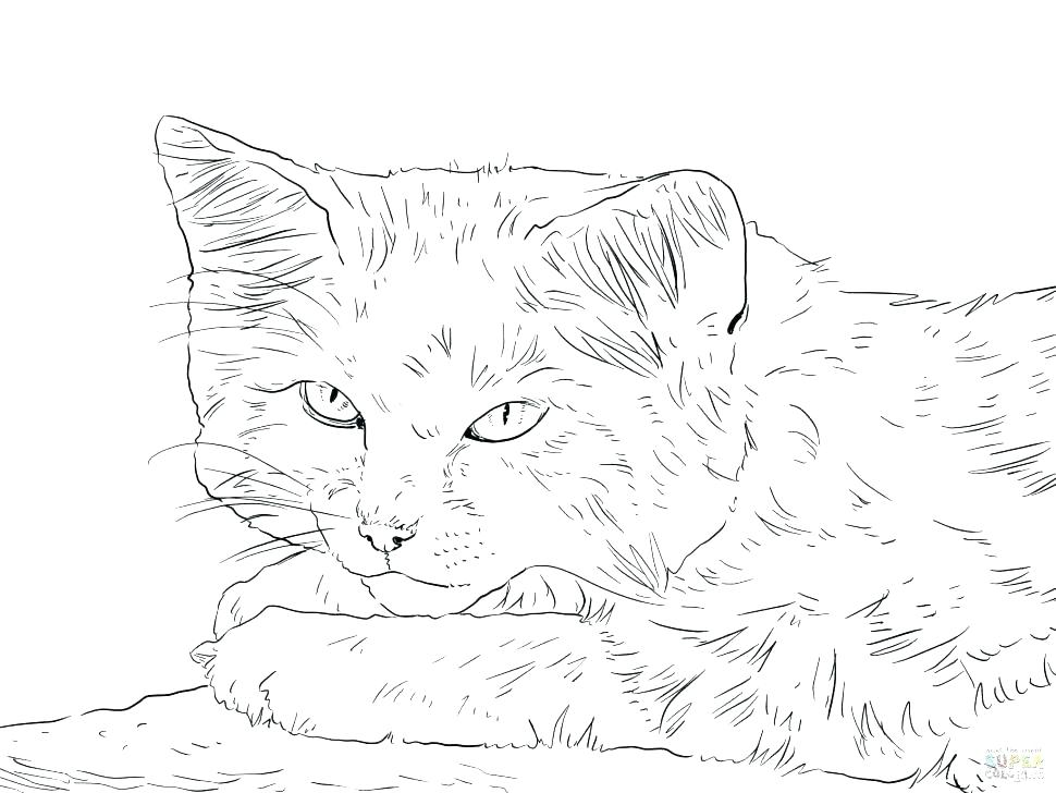 970x728 Realistic Big Cat Coloring Pages Color Printable Help
