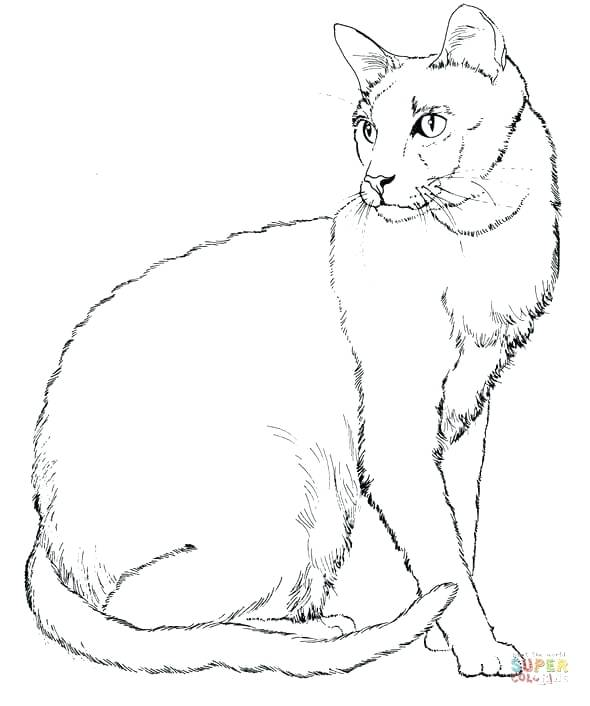 590x706 Realistic Cat Coloring Pages And Cat Color Pages Printable Cat