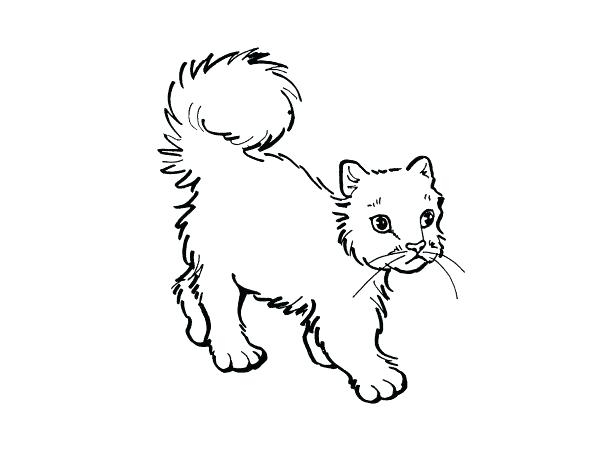 608x456 Realistic Cat Coloring Pages Cat Color Pages Printable Realistic