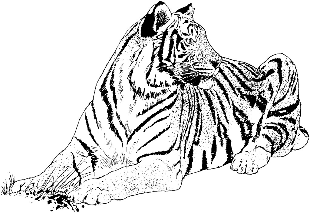 1024x702 Realistic Coloring Pages Realistic Cat Coloring Pages