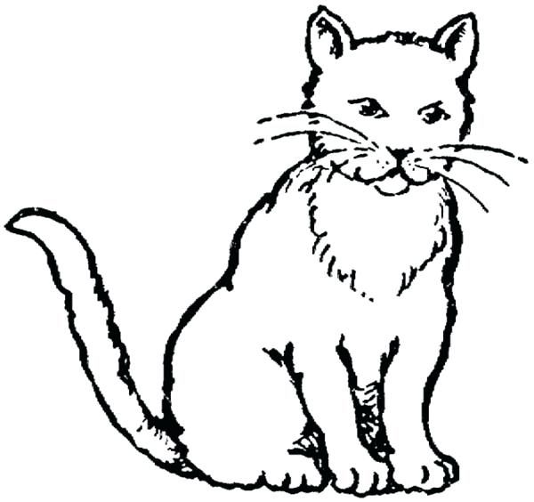 600x564 Cat Coloring Page Realistic Cat Coloring Pages Printable Realistic