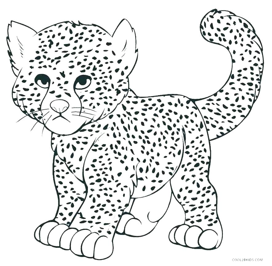 Realistic Cheetah Coloring Pages