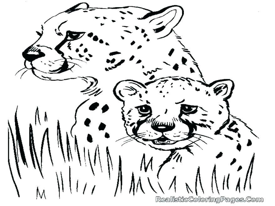 878x659 Cheetah Coloring Pages Cheetah Coloring Pages Printable Real