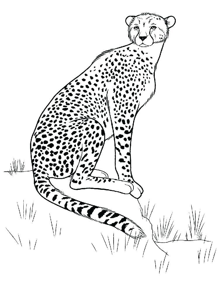750x1000 Cheetah Coloring Pages Coloring Pages Of Cheetahs Cheetah Animal