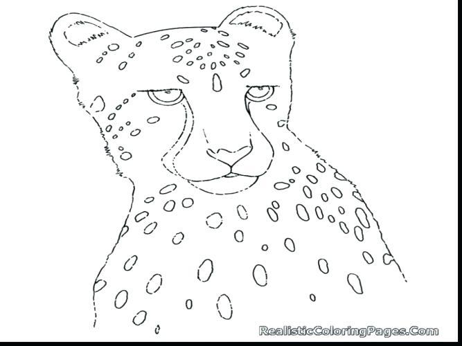 667x500 Cheetah Coloring Page Cheetah Coloring Pages To Print Cheetah
