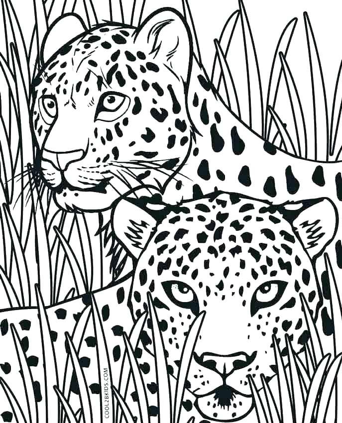 687x850 Realistic Cheetah Coloring Pages Cheetah Coloring Pages Cheetah