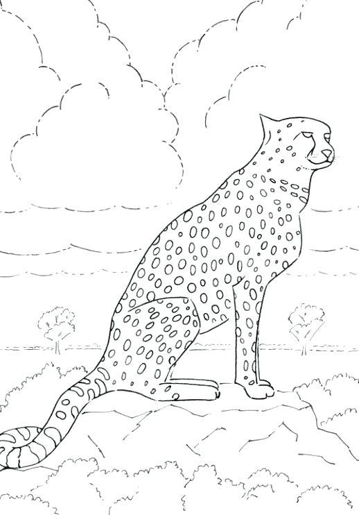 518x742 Realistic Cheetah Coloring Pages Printable Coloring Cheetah